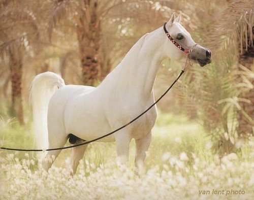 beauti horse