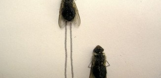dead_flies_art_07.jpg