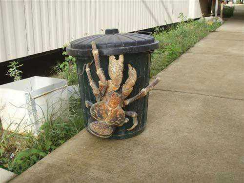 world largest animal crab