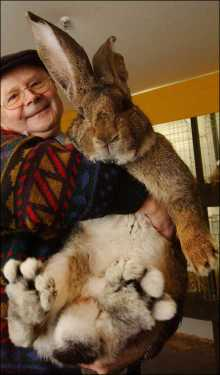 world largest animal rabbit