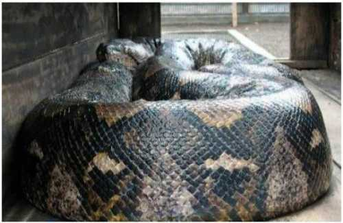 world largest animal snake