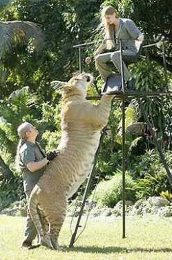 world largest animal wildcat