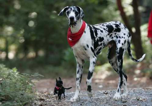world tallest animal dog