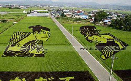 amazing japan rice harvesting 7