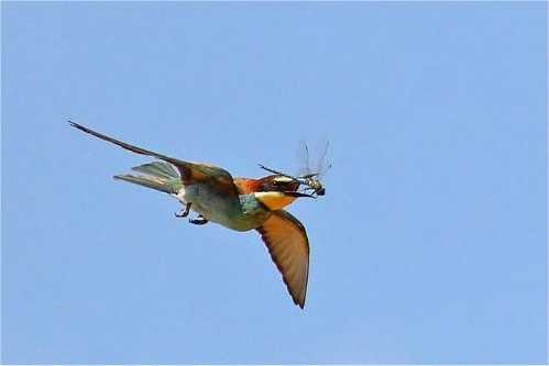 amazing animal bird photographs 15
