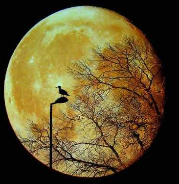 amazing animal bird photographs 16