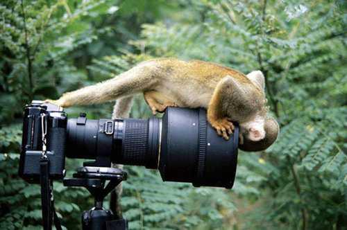 amazing animal bird photographs 17