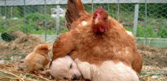 amazing_animal_bird_photographs_20.jpg