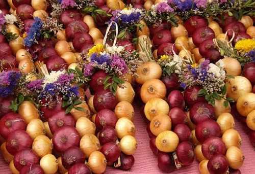 amazing onion festival 34