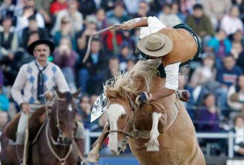 best horse rider 15