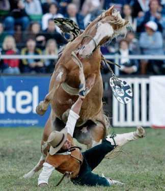 best horse rider 18