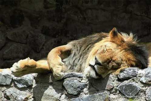 sleeping animals 26