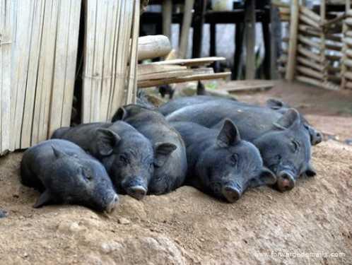 sleeping animals 29