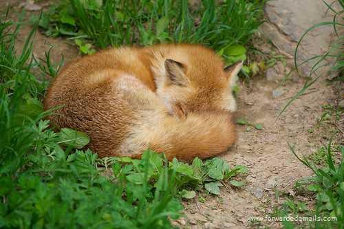sleeping animals 32