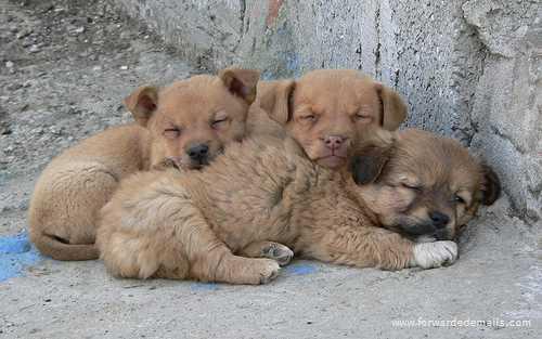 sleeping animals 33