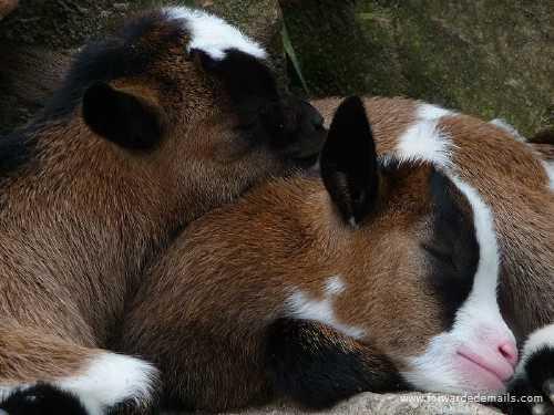 sleeping animals 35