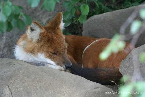 sleeping animals 37