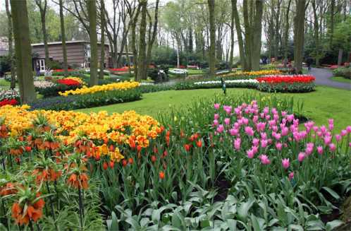 most-beautiful-park-in-the-world-Keukenhof-the-Netherlands
