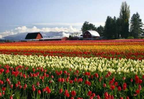 most-beautiful-park-in-the-world-The-Skagit-Valley-Washington-state