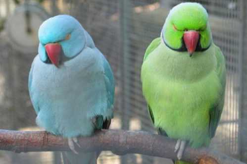 beautiful couple birds 2