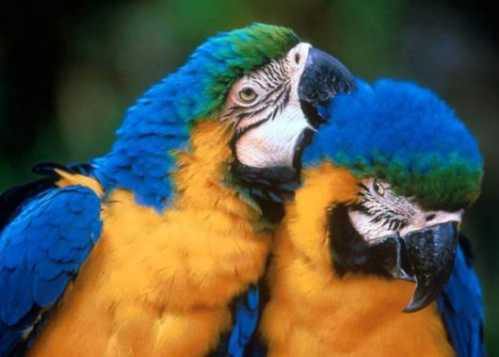 beautiful couple birds 3