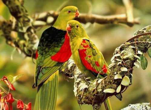 beautiful couple birds 4
