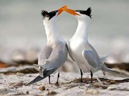 beautiful couple birds 6