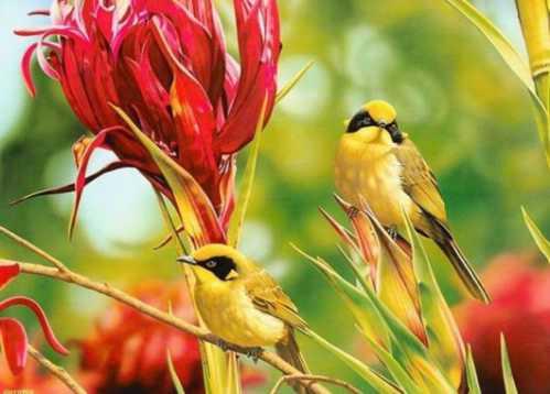 beautiful couple birds 8