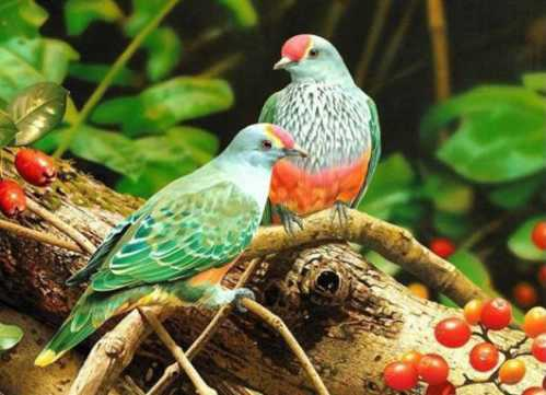 beautiful couple birds 9