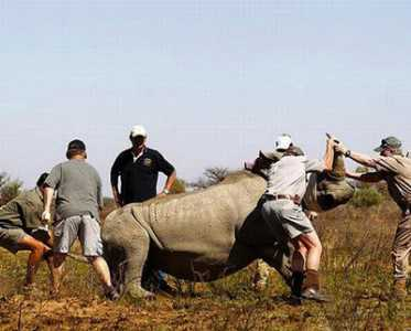 top most expensive materials rhino horn