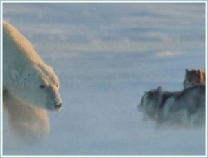 Polar Bear: I come in peace..[Fwd: Sharon Rajkumar]