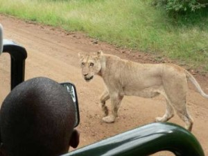 Kruger National Park, South Africa [Fwd: Sharon Rajkumar]