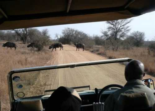 kruger national park south africa 22