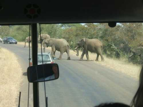 kruger national park south africa 8