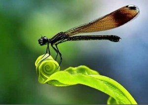 Amazing Pictures of Insects [Fwd:  Sharmila]