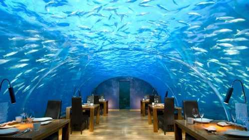 amazing restaurant 35