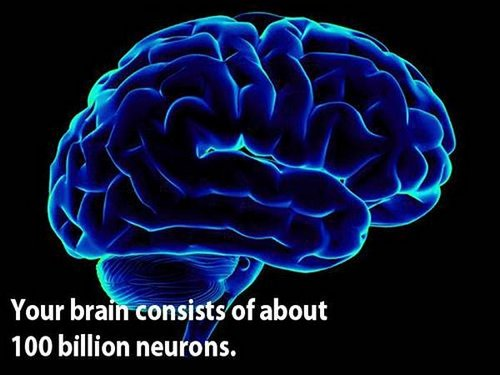 18 facts human brain 1