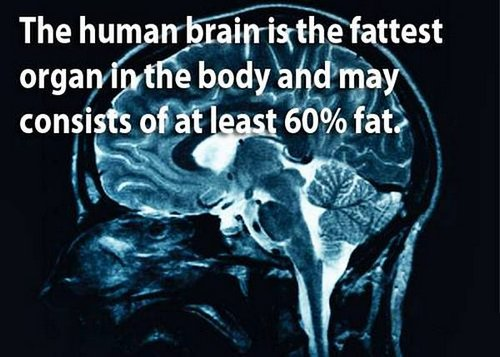 18 facts human brain 10