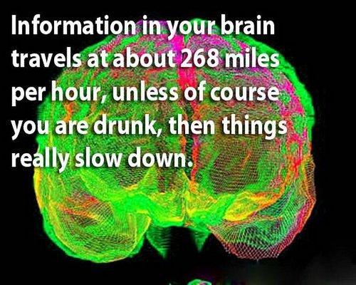 18 facts human brain 14