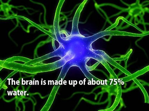 18 facts human brain 3