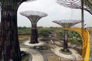 Stunning Super Forest In Singapore  [Fwd: Sharon Rajkumar]