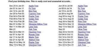 tree_1-2.jpg