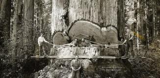 redwood_1.jpg