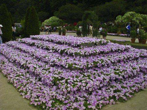 ashikaga-flower-park-7