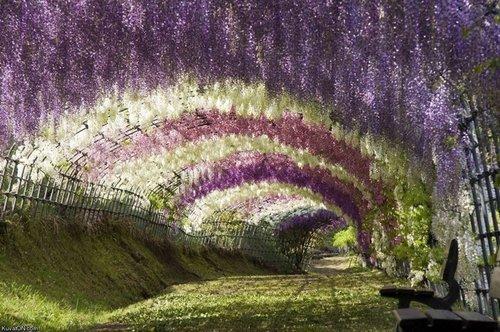 ashikaga-flower-park-8