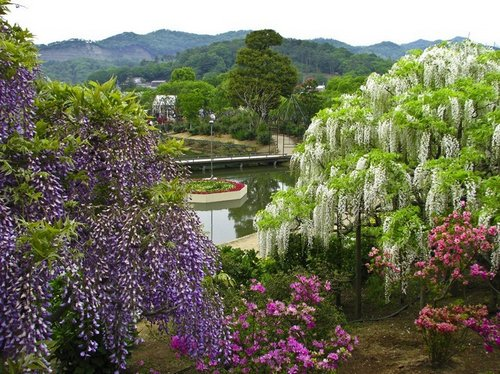 ashikaga-flower-park-9
