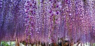 ashikaga_flower_park_1.jpg