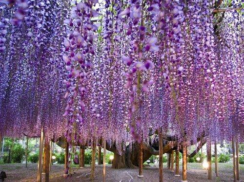 ashikaga flower park 1