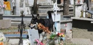 dead_man_dog_1.jpg