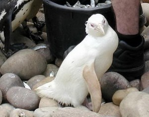 Unique Animal: Collection Of Albino Animals [Fwd: Sharon Rajkumar]